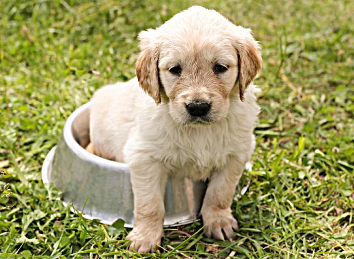 Niebezpieczne produkty dla psa